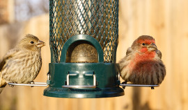 Feeding Wildlife and Keeping Them Safe from Disease